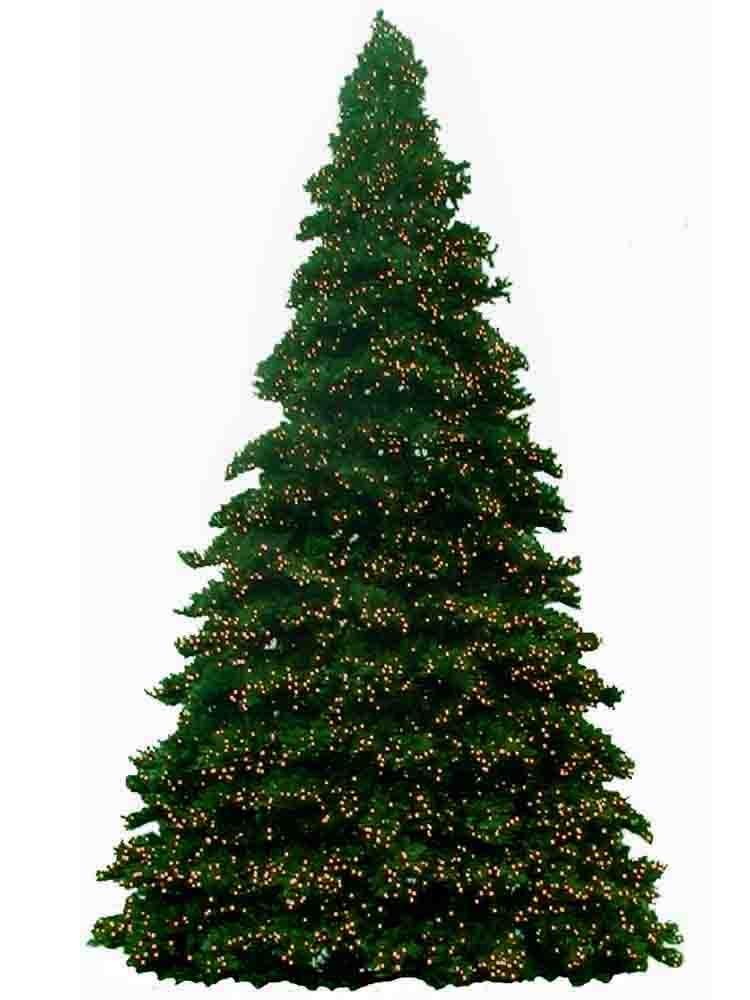 14 Foot Christmas Trees With C-7 LED Bulbs